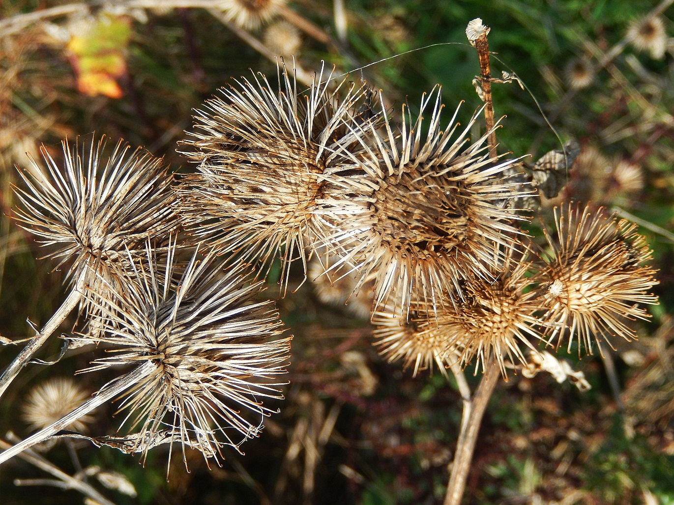 Hips, Haws, And Burrs: Yes, It's Autumn At Wraysbury Lakes